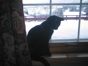 original cat on windowsill silhouetted against the snow